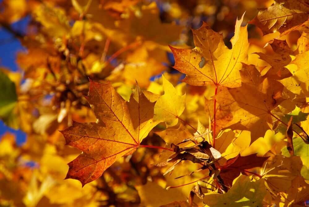 Fotografieren im Herbst – 5 Tipps für stimmungsvolle Portraits